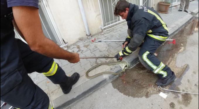 Bursa'da nefes kesen yılan operasyonu!