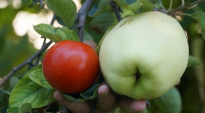 Bu meyvenin adını bilen yok!