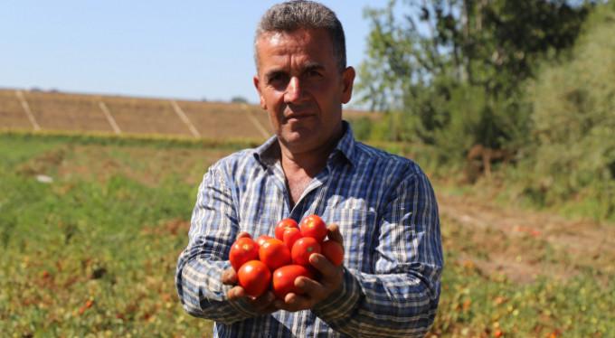 Üretici isyanda... 4 kilo domatese 1 çay