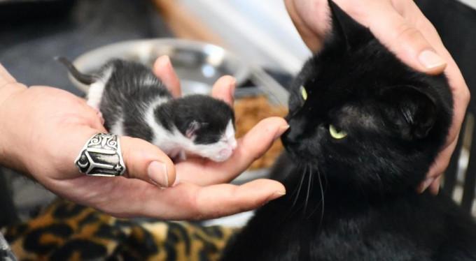 Ayağı kırılan gebe kedi hayata böyle döndürüldü