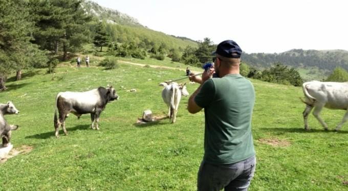 Afrika değil Bursa'da, dağda kurbanlık avı