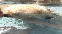 Sahibiyle havuzda baloncuk çıkaran sevimli köpek