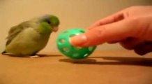 Sevimli kuş ve oyun topu