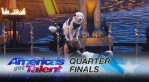Yarışmacı köpekten ağızları açık bırakan bir performans