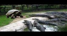 Hayvanların Yardımına Koşan 6 Hayvan